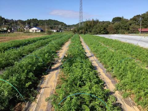 常陸大宮の無農薬有機農業コトコトファーム
