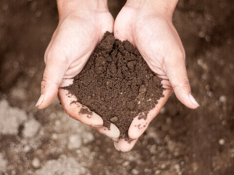 畑の土を大事に育てる